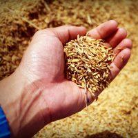 Grain-Free Saved My Life