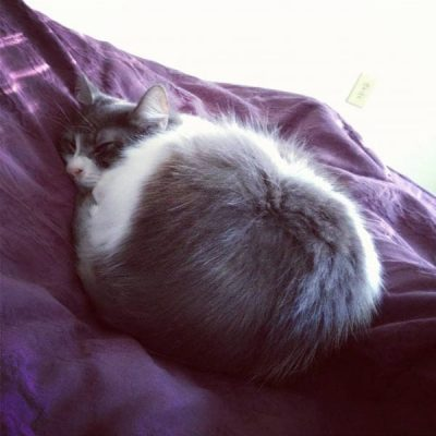 How I Functionally Cured My Cat's Autoimmune Disease